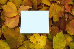 White empty paper postcard with an empty space for text, copyspace, on a background of yellow and red autumn leaves, flat lay, greeting card concept, cover design, October advertising