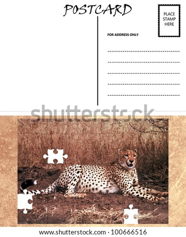 White Empty Postcard Template with Copy Area with Cheetah Puzzle Image - stock photo