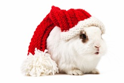 White fancy rabbit in a knitted cap over white