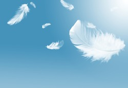 White feather falling in the sky, blue background