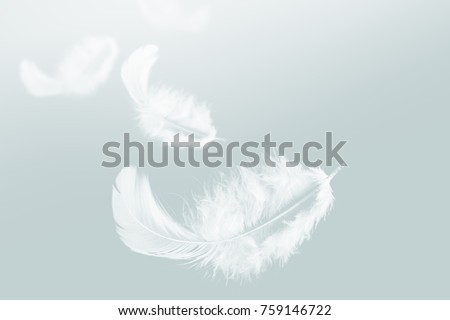 White feather floating in the sky #759146722