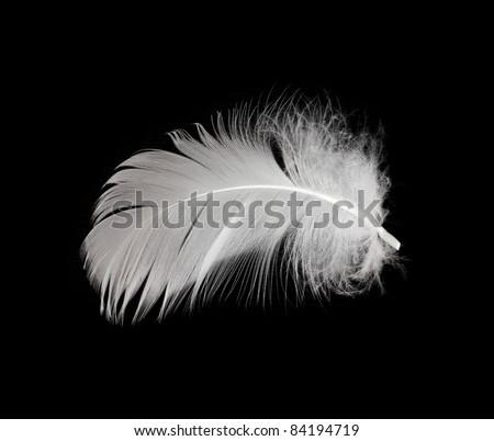 White feather isolated on white background - stock photo