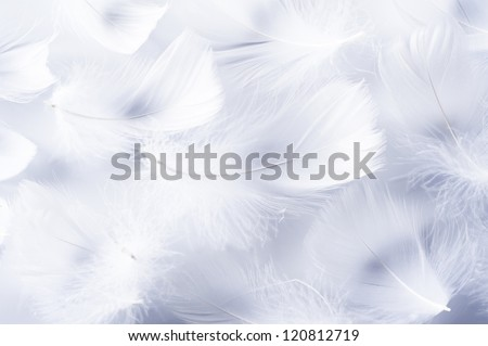 White feather of bird for background image