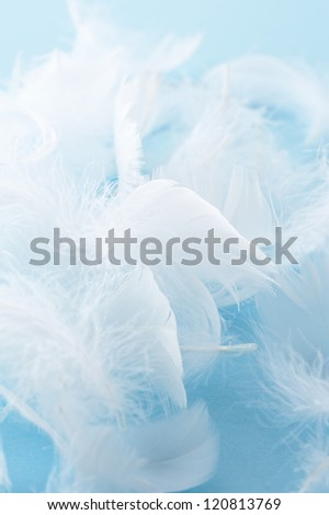 White feather of bird on light blue background