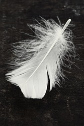White feather on an old board