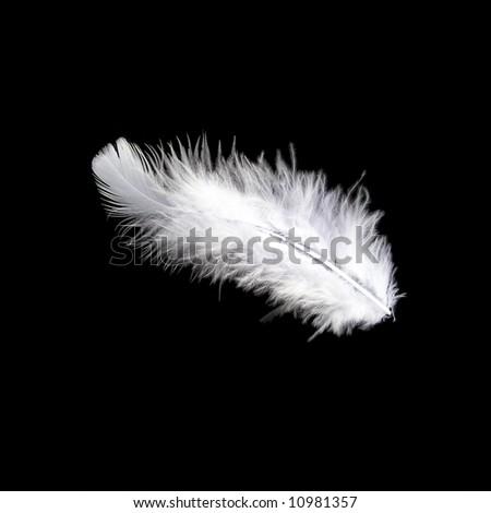 White feather on black - stock photo