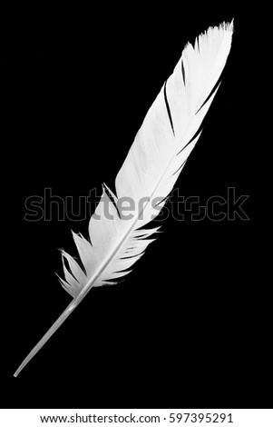 white feather on black background #597395291