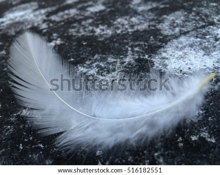 white feather on ground ,feather is very solf #516182551