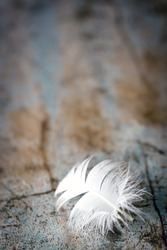 White feather on old timber background.  Great grunge textures.