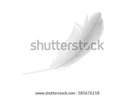 white feather on white  background