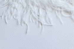 White feather on white textured background. Frame, free space for your text or product. Tenderness concept