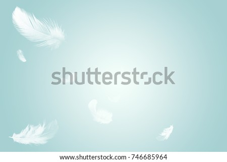 White feathers floating in the sky