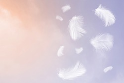 White feathers floating in the sky  pastel tone with sunlight. free space for add text or season,festival,baby products and other.