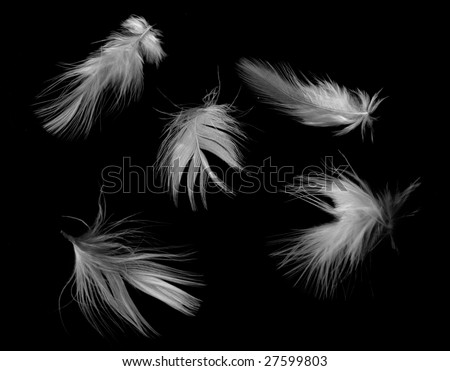 White feathers isolated on black.