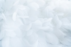 white feathers or White fabrics background , Wedding, Valentine, Engagement, Anniversary theme