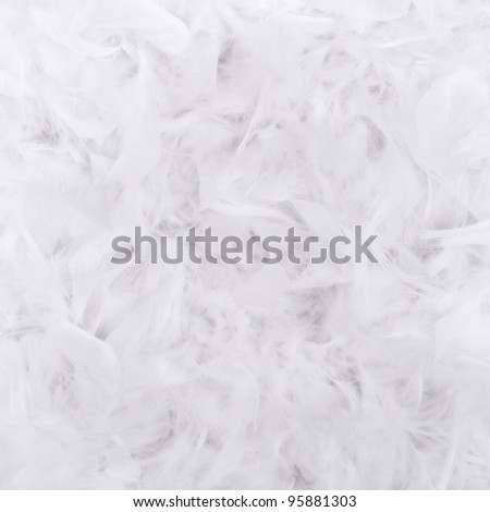 White feathers texture for background