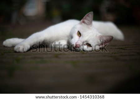 White feline cat with yellow eyes laying down on street pavement #1454310368