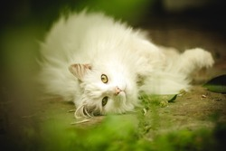 white feline resting ok ok