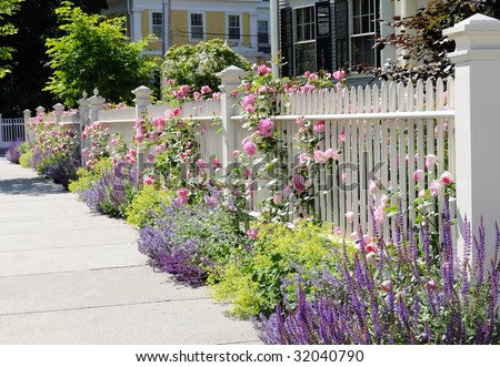 White fence with flowers. Pink roses, blue sage, purple catmint, green and yellow lady's mantel. Colorful and elegant.