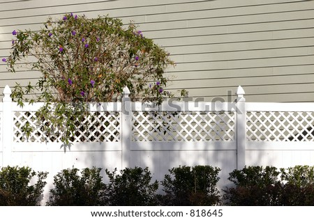 white fence with purple flower on bush outside residence