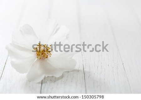 white field rose flower on bright wooden surface