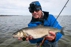 White fish - fly fishing trophy