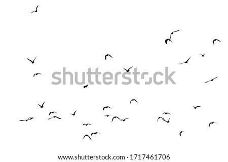 Photo of  White flock of birds flying