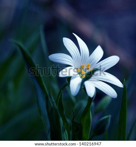 White flower #140216947