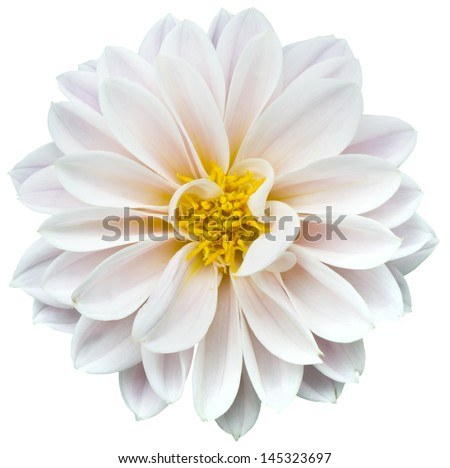 White flower Stock photo ©