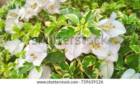 White flower background - Shutterstock ID 739639126