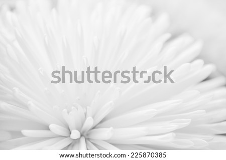 White flower close-up wedding abstract background