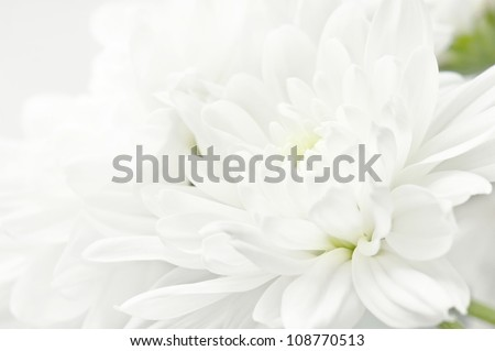 White flower closeup