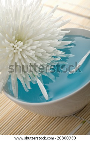white flower floating in bowl. spa background - stock photo