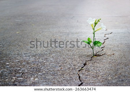 Shutterstock white flower growing on crack street, soft focus, blank text