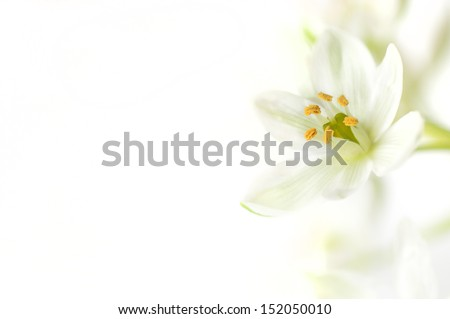 White flower on a white background