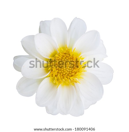 White flower on isolate background - stock photo