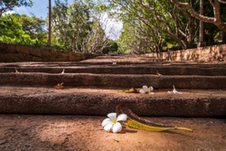 White flower on staircase to the Buddhist Monastery in Mihintale, the site of pilgrimage, historic and cultural interest