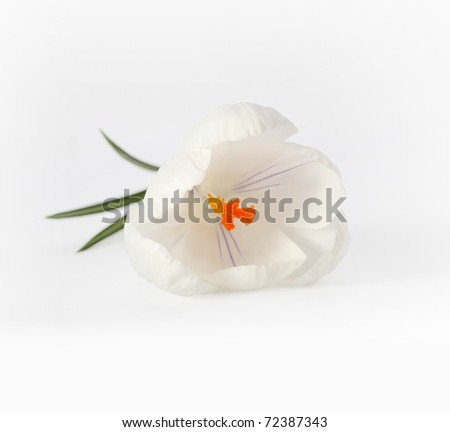 white flower on white background