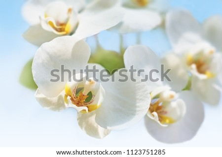 White flower Orchid flowering.  #1123751285