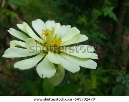 Free photos white flowers with yellow in middle avopix white flower with yellow middle 643982479 mightylinksfo