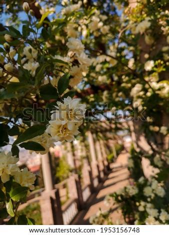 white flowers garden, jardín del teatre grec. Barcelona Zdjęcia stock ©