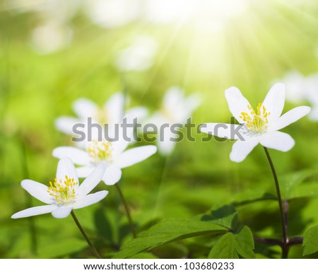 white flowers in forest. Nature composition.