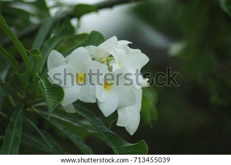 Free photos white flowers with yellow in middle avopix white flowers in the middle are yellow 713455039 mightylinksfo