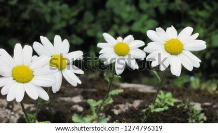 White flowers macro pic.