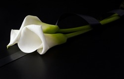 White flowers of Zantedesia tied with a mourning ribbon on a black background. Copy space. Concept of sorrow and death