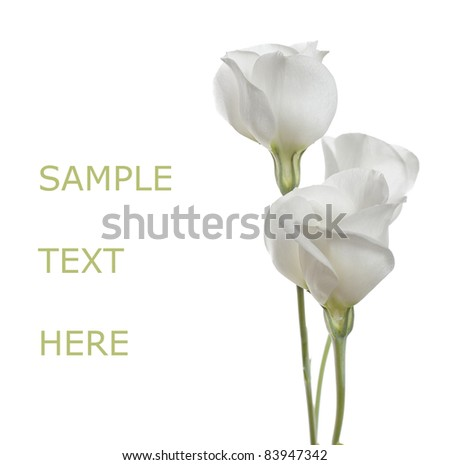 White flowers on white isolated background with copy space(Lisianthus flowers).