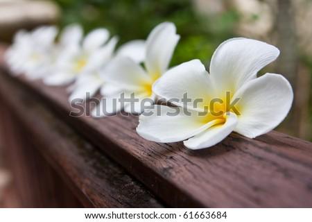 white flowers on wooden floor