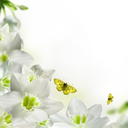 White flowers postcard with butterfly isolated over white