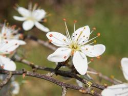 White flowers, Saint-Pere-sur-Loire, Loiret, Centre-Val de Loire, France