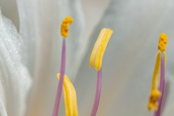 White flowers stamens and pistils